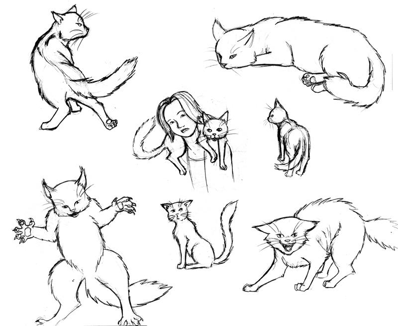 catactionposes